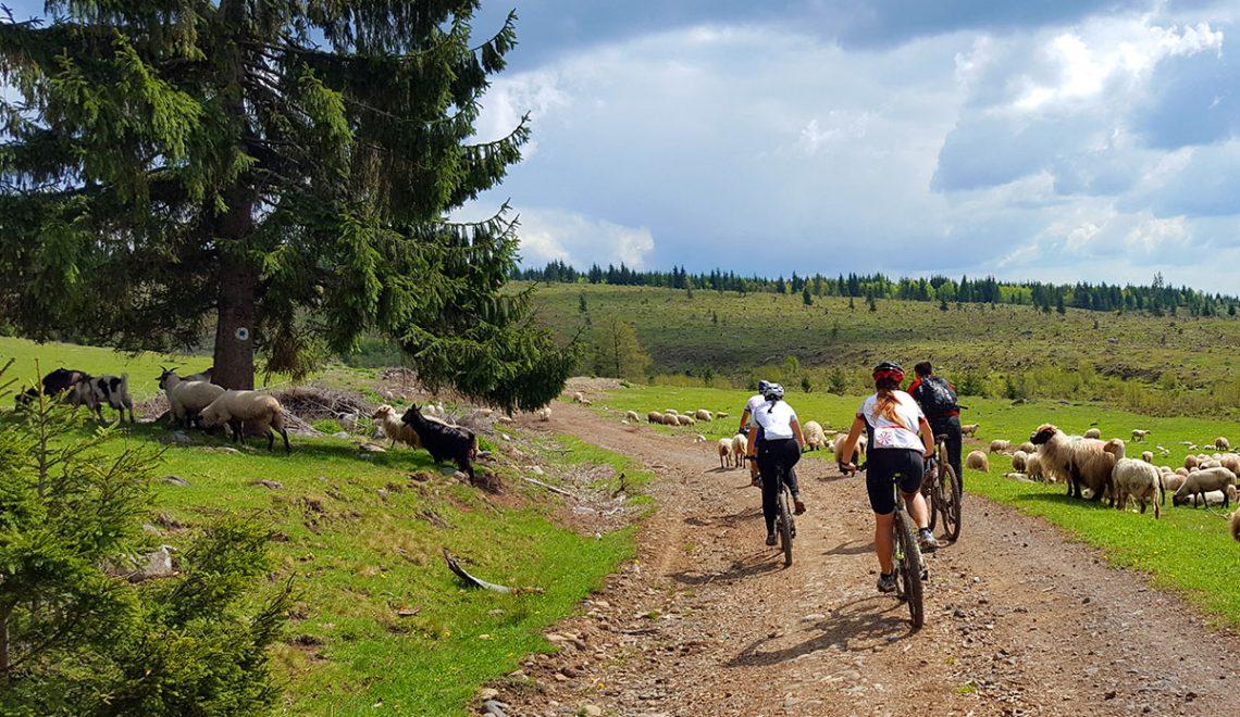 Cu bicicleta in muntii Harghita
