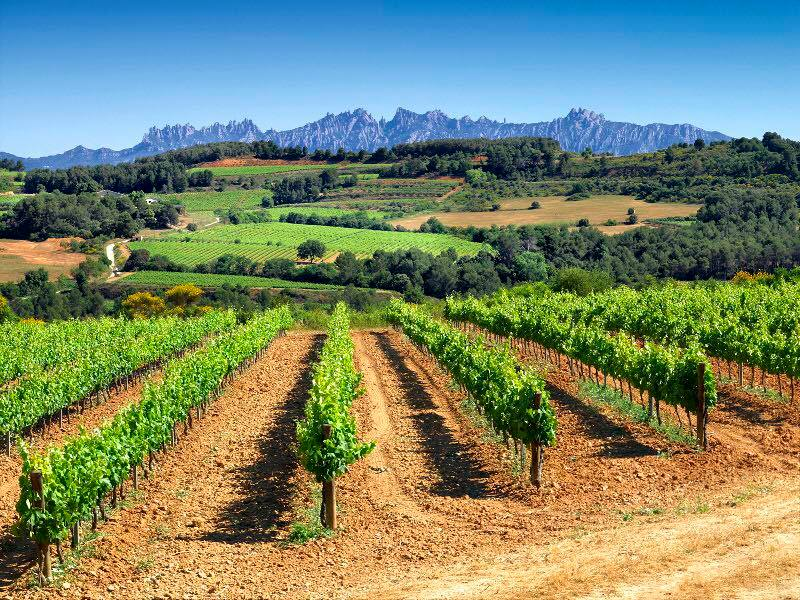 Seara de degustare Vinuri Spaniole la #Medias